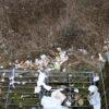 Deutliche Zunahme der Naturschutzverstöße während des Pandemiejahrs
